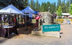 strawberry music festival, fall 2014